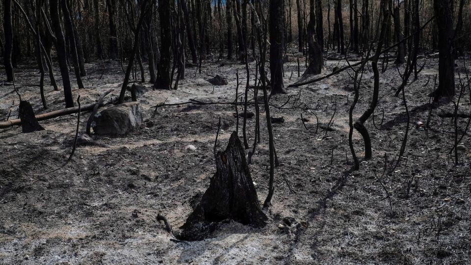 Kenow wildfire, Waterton, Waterton Lakes,