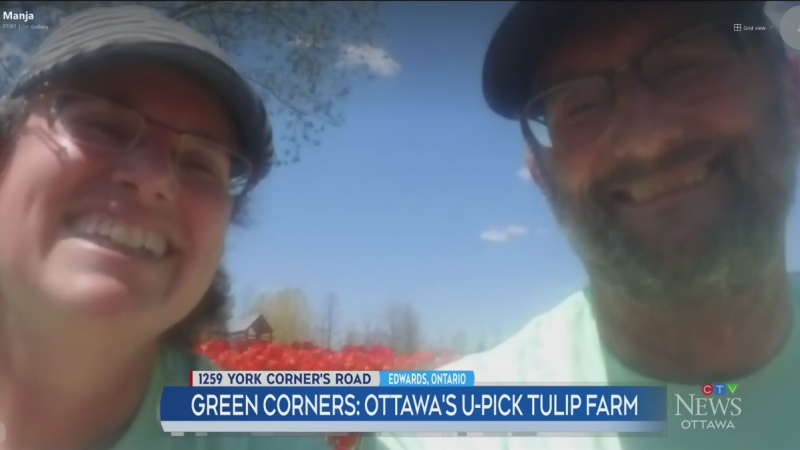 Green Corners: Ottawa's u-pick tulip farm, part 2