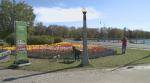 Tulips near Dow's lake