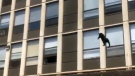Chicago cat jumps five storeys and survives