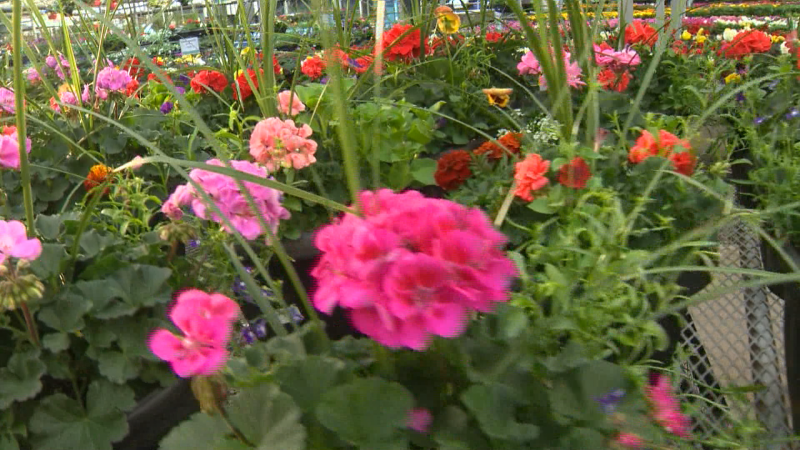 Whether you are growing fruits, veggies, herbs, or blooms, it's time to get gardening at Golden Acre Home & Garden