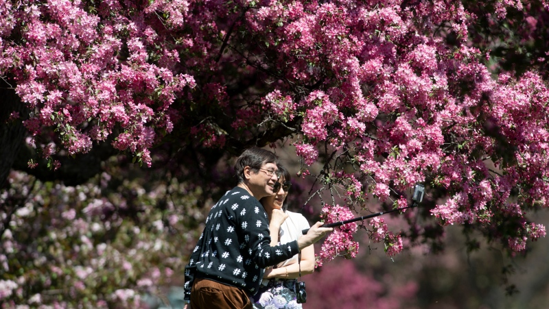 Jim Wong and Tracy Ng take a photo as they pause during a walk through the Experimental Farm, Friday, May 14, 2021 in Ottawa. (Adrian Wyld/THE CANADIAN PRESS)
