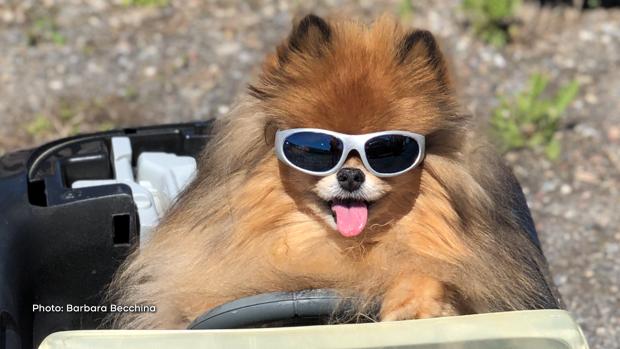 This is Rocky loving the sunshine! (Barbara Becchina/CTV Viewer)