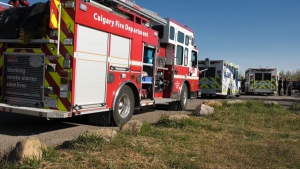 Emergency crews were called to Edworthy Dog Park at about 8 a.m. on Saturday morning.
