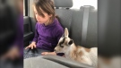 Fallyn Dunkle logs onto her online classes while her pet goat Hunchee joins in (Supplied).