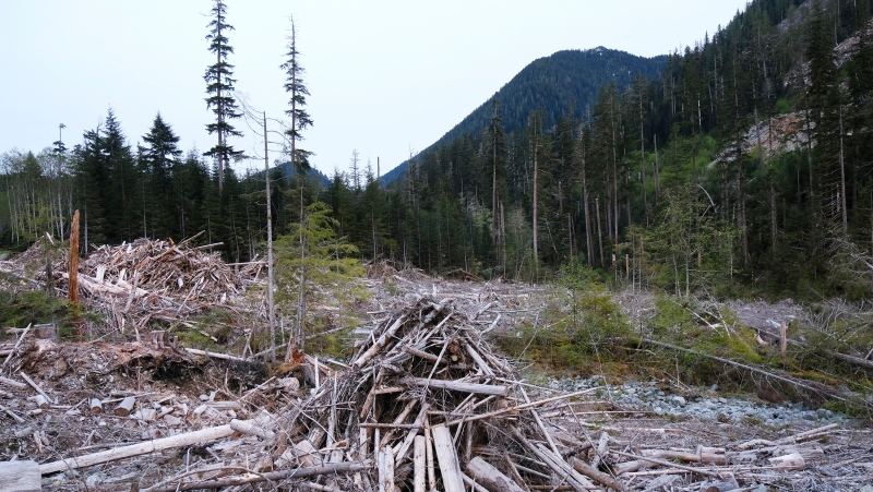 Dead trees and refuse are shown along the Bugaboo, a logging road in the Fairy Creek area near Port Renfrew, B.C., on Tuesday, May 11, 2021. A number of blockades are set up in the area to prevent the logging of old-growth forests. THE CANADIAN PRESS/Jen Osborne