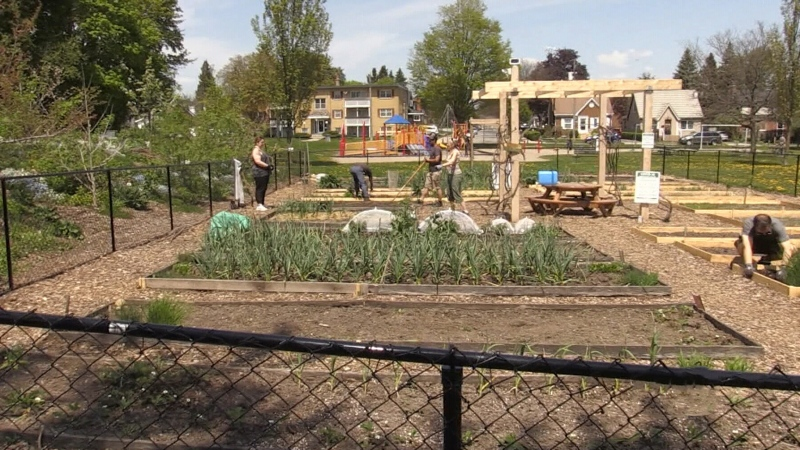 Community comes out to garden in Kitchener