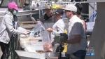 Spot prawn season kicks off