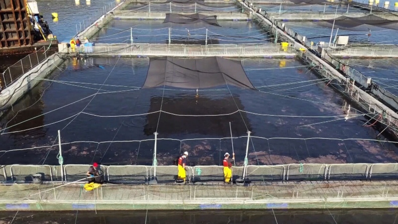 A dispute is brewing between a foreign-owned aquaculture company and local conservationists and tour operators off the coast of Vancouver Island in British Columbia over plans to dump pesticides in the water.