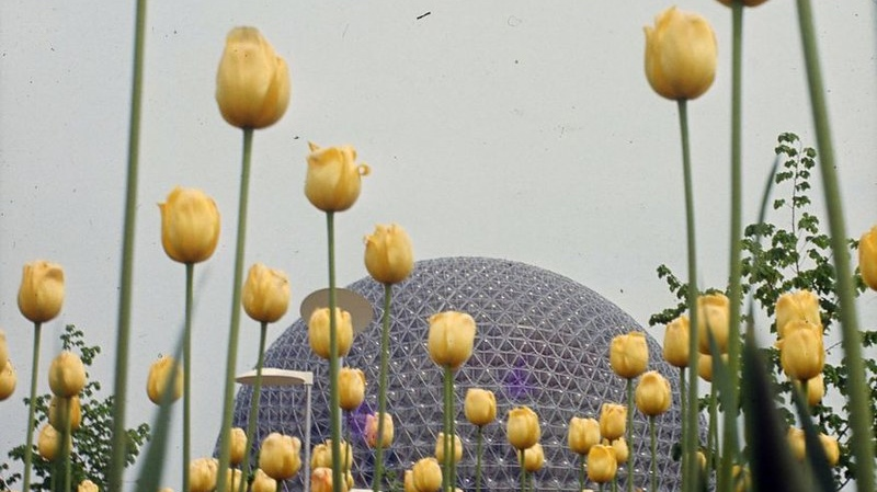 Expo 67 tulips