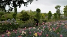 Working in the garden of Claude Monet's house in Giverny, west of Paris, on May 17, 2021. (Francois Mori / AP)