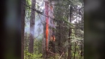 A fire that broke out on May 17, 2021, in Stanley Park is under investigation. (Submitted)