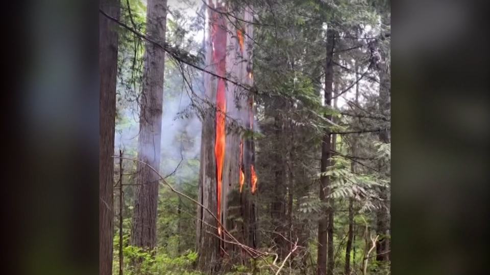 Fire at Stanley Park