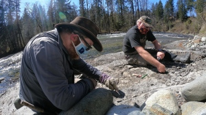 Researchers are seen excavating the fossil from the banks of the Puntledge River on Vancouver Island: (Royal BC Museum)