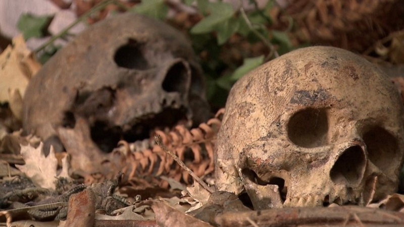 The skulls of Vancouver's 'Babes in the Woods' are seen in a display at the Vancouver Police Museum.