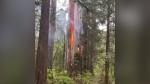 Fire in Stanley Park