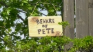 A 'Beware of Pete' sign, warning walkers of a territorial red-winged blackbird along a trail in Kanata. (Dave Charbonneau / CTV News Ottawa)