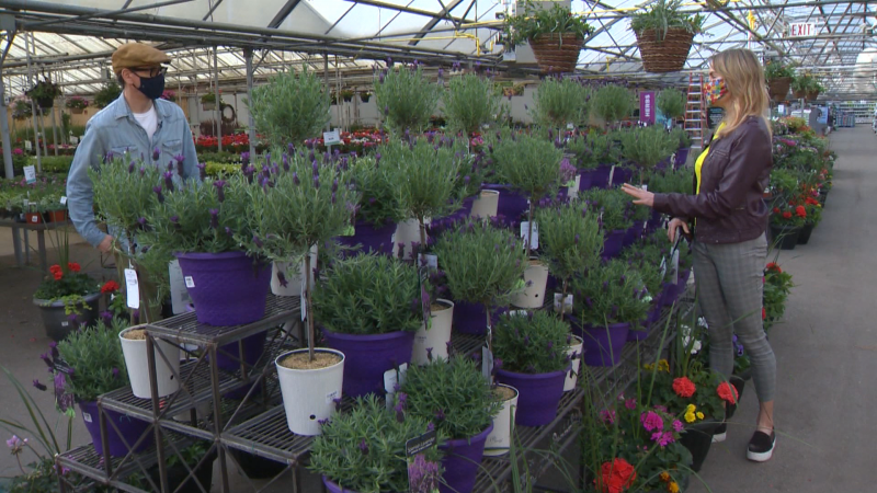 The experts at Golden Acre Home & Garden have long weekend tips on getting your bedding plants, pots and more growing this season