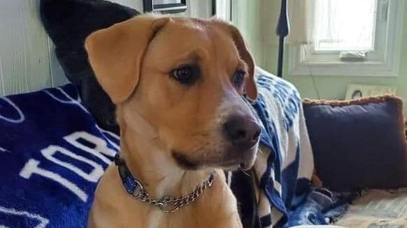 Missing Innisfil dog