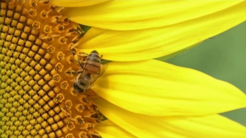 No need to worry about big bee buzz