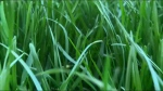 Leave your grass longer so it stays healthy.