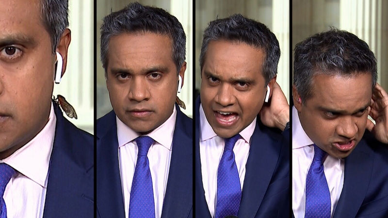 Cicada crawls on CNN reporter's neck on camera
