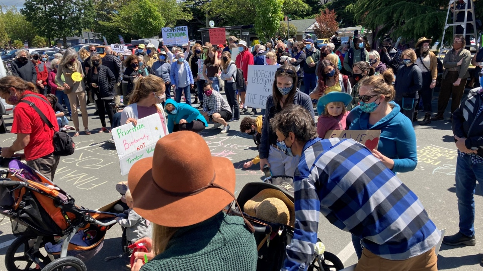 Horgan old-growth protest