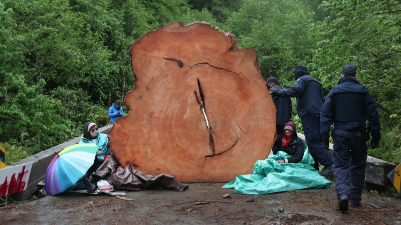 RCMP officers make their way around two protesters chained to a tree stump at an anti-logging protest in Caycuse, B.C. on Tuesday, May 18, 2021. THE CANADIAN PRESS/Jen Osborne