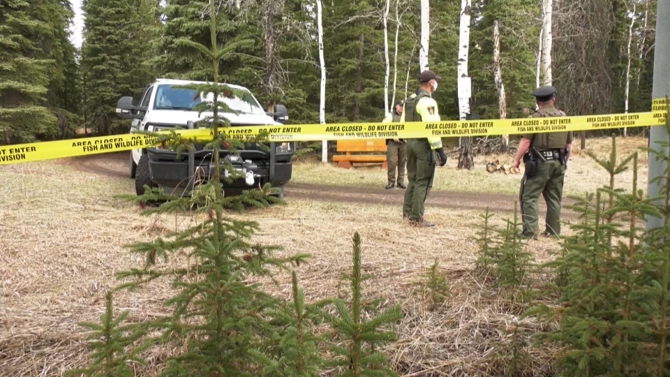 Water Valley, grizzly bear, attack, fatal