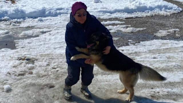 Dog travels 70 km to reunite with family