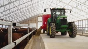 F2F: Ontario Cattle Feeders