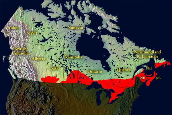 Temperature is said to be a critical factor in limiting the spread of the I. scapularis in Canada. And climate change is expected to drive the spread northward. This map shows a projection for the spread of I. scapularis in 2020 -- in eastern and Central Canada, as effected by climate warming.