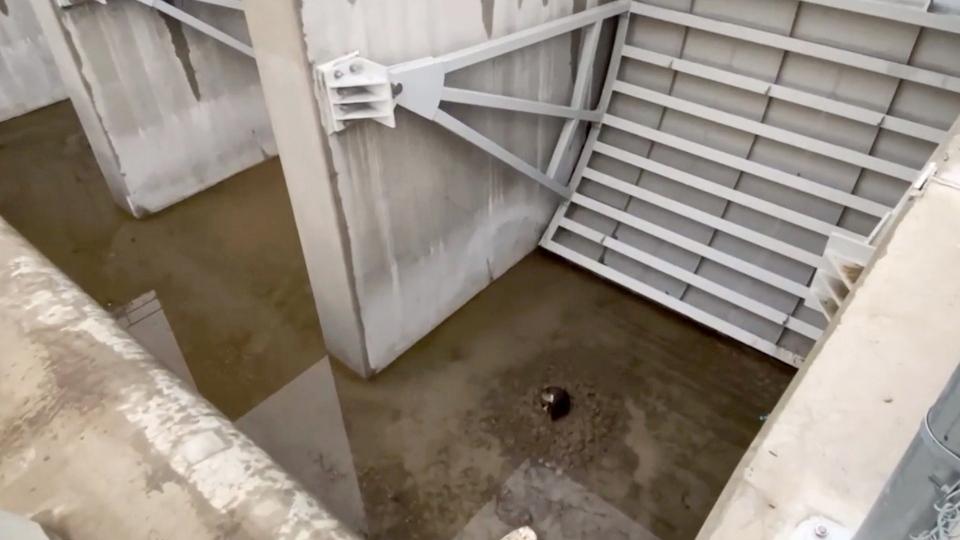 Elmer Plopps Lethbridge dog rescue