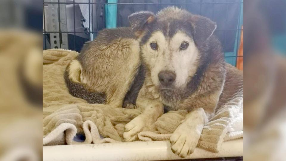 Elmer Lethbridge rescue dog