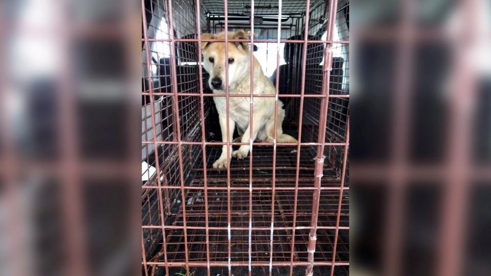 Deloris Lethbridge rescue dog