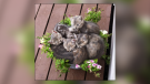 Picture This: Baby birds and animals