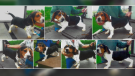 Stolen beagles from a Lakeshore, Ont. property on June 5, 2021. (Supplied)