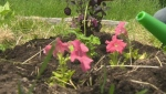 Tips on caring for plants in extreme heat