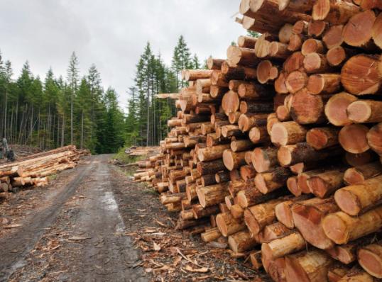 B.C. Logging