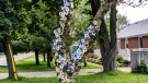 Paul Fegun constructed a disco tree on his front lawn to slow down traffic.