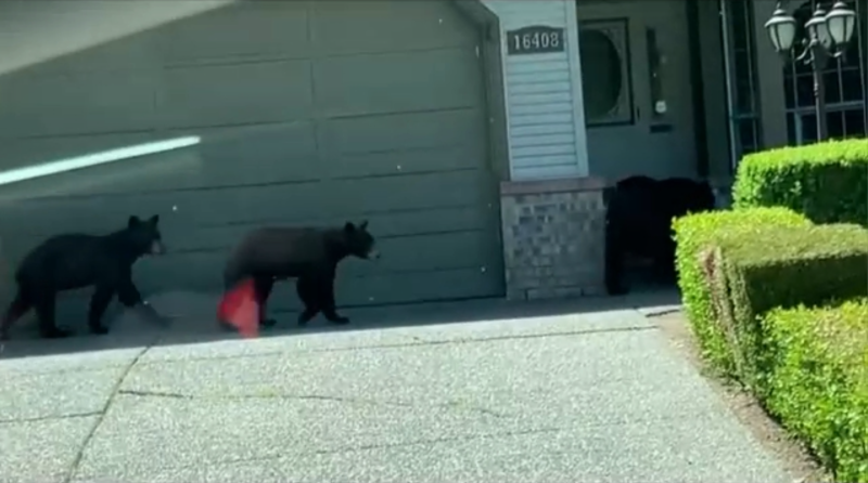 The B.C. Bear Alliance is calling for more education and understanding on how to coexist with the animals in a much more peaceful way.
