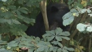 Calls for education after bear destroyed