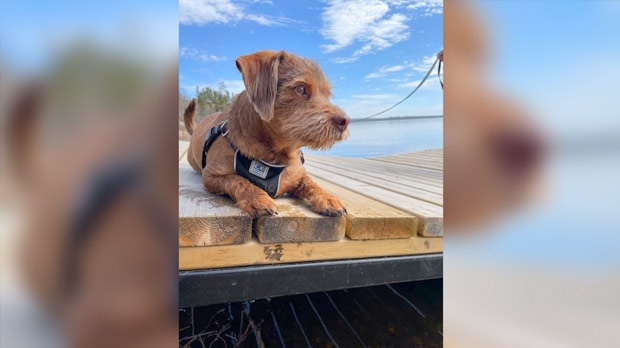 Maverick, taking in the rays at The Big Whiteshell. Photo by Nicole Carter.