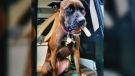 Camper the missing dog is shown: (Victoria Police)