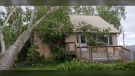 Large tree damages house roof in Pilot Mound after strong winds on June 11 (Source: Elaine Popplestone)