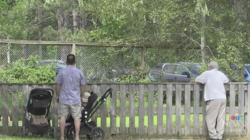 Elmvale Zoo reopens to public