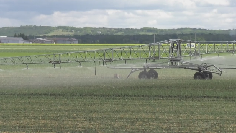 Dry spell impacts Simcoe County farmers (Rob Cooper/CTV News)