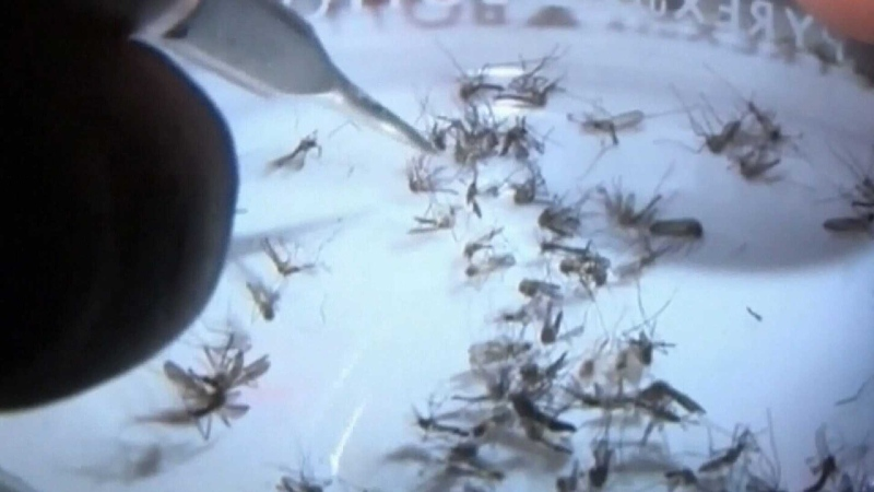 City reports mosquitos scarcity