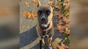 Dog that fled violent crime still missing
