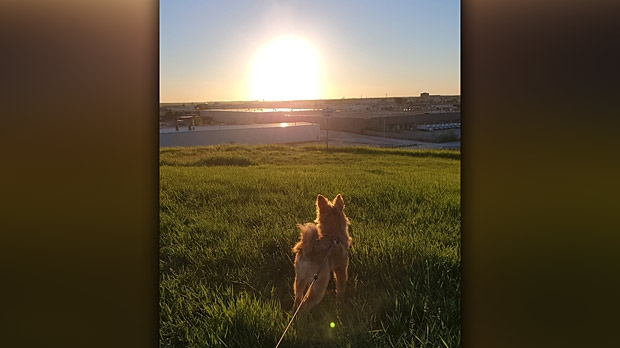 A puppy's first sunset Garbage Hill, Winnipeg. Photo by Paolo Pe.